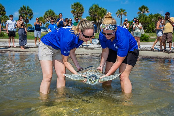se aturtle being carried into the water for release
