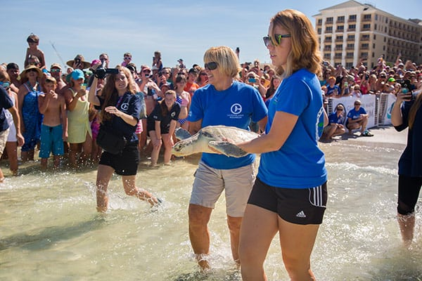 Kemp's ridley sea turtle release at Clearwater Beach