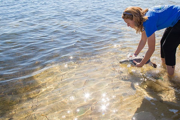 Nyx sea turtle release at Fred Howard Park