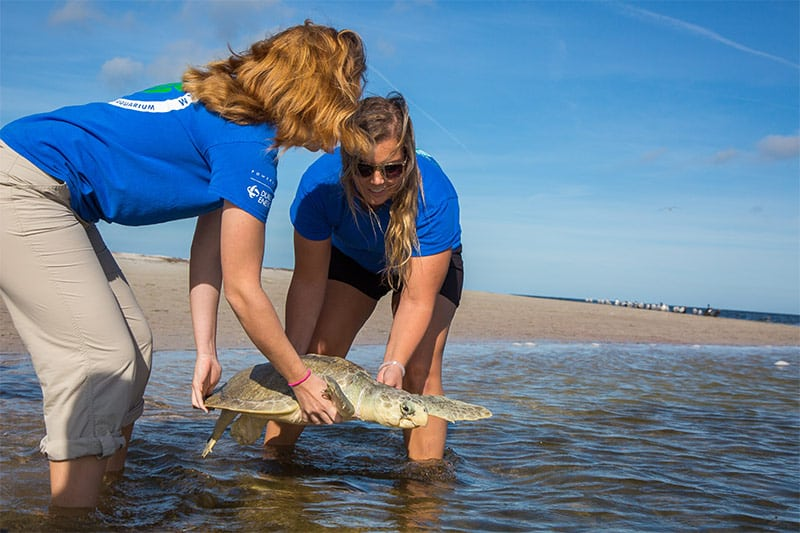 Iris Sea Turtle Release