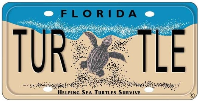 sea turtle license plate