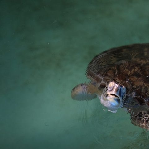 Quaker rescued sea turtle in rehab pool