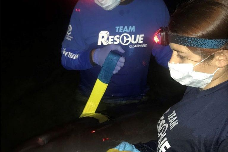 hernando beach dolphin rescue team