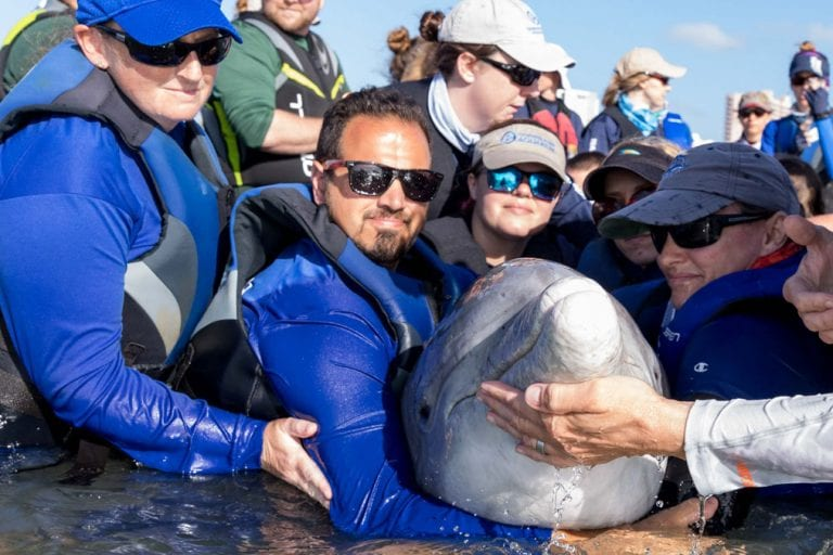 rescue team in water for dolphin disentanglement