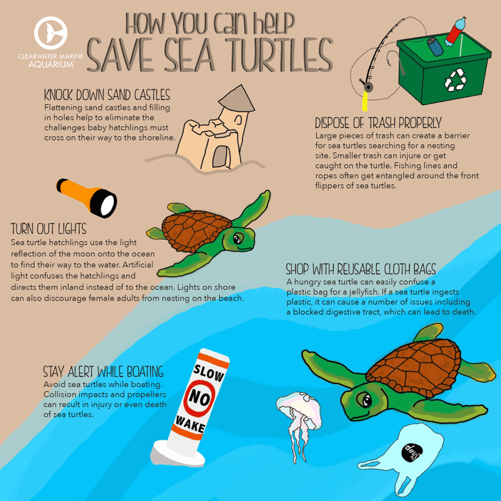 sea turtle inforgraphic