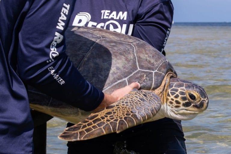 Quinn, sea turtle release