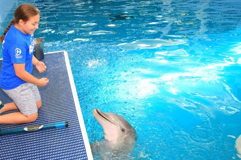 Jordan with dolphin