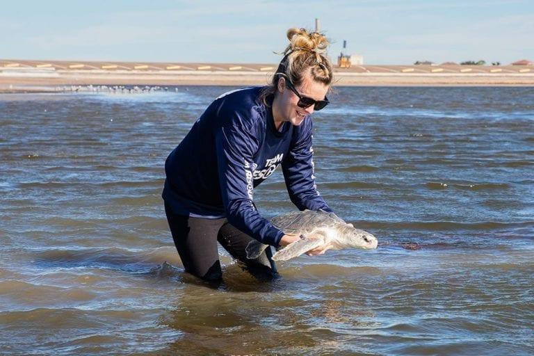 War, Kemp's ridley sea turtle release