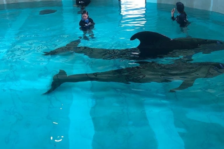 Pilot whales in rehab facility