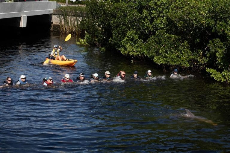 rescue team forming human chain to help dolphins