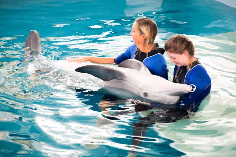 dolphin being pet