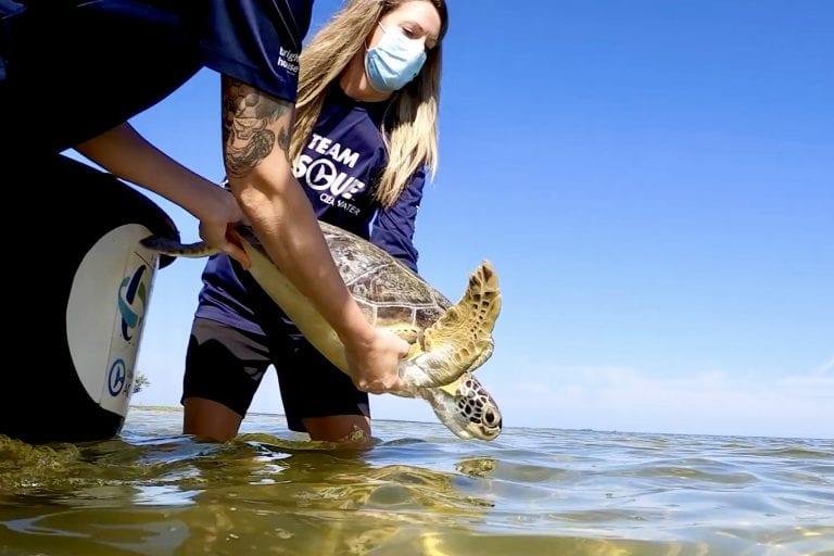 Sea turtel released