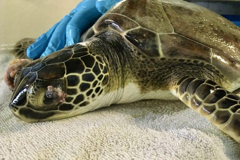 sea turtle zero
