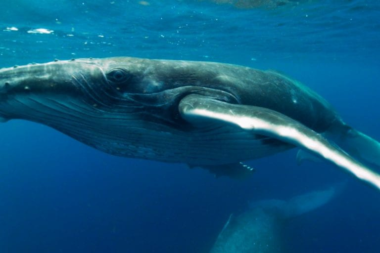 Whale Close-Up